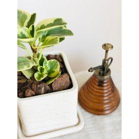 maceta-cubo-planta-peperomia-50000834