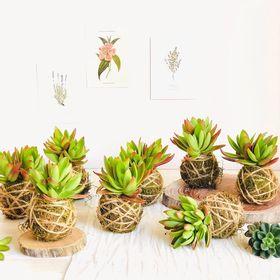 kokedama-de-planta-suculenta--50000833