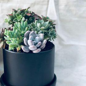 mini-jardin-eustaquio-negro-50000838