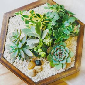 hexagono-de-madera-con-suculentas--50000843